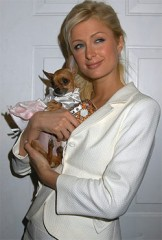 paris_hilton_chien.jpg